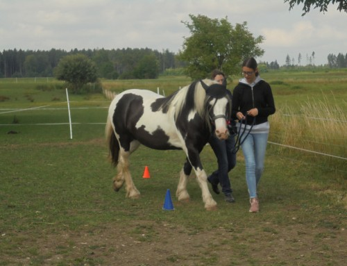 Projekttag Pferd (22.07.2019)